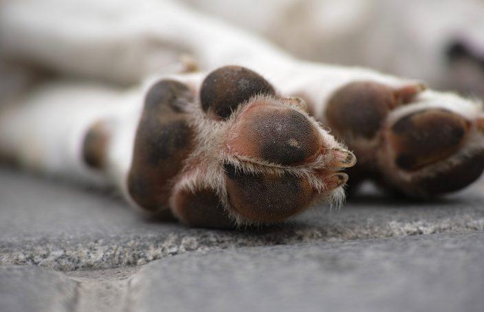¿Cómo ayuda la homeopatía a mejorar la salud de los animales?