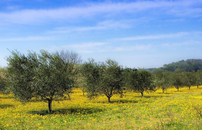 La experiencia del Paciente: tratamiento de la alergia con Homeopatía