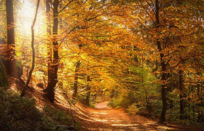 Homeopatía, cáncer y sol de navidad