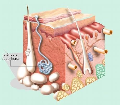 Sudor e hiperhidrosis en homeopatía