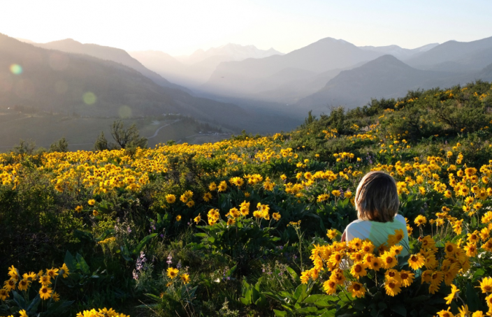 Imagen de un paisaje de la planta Arnica Montana