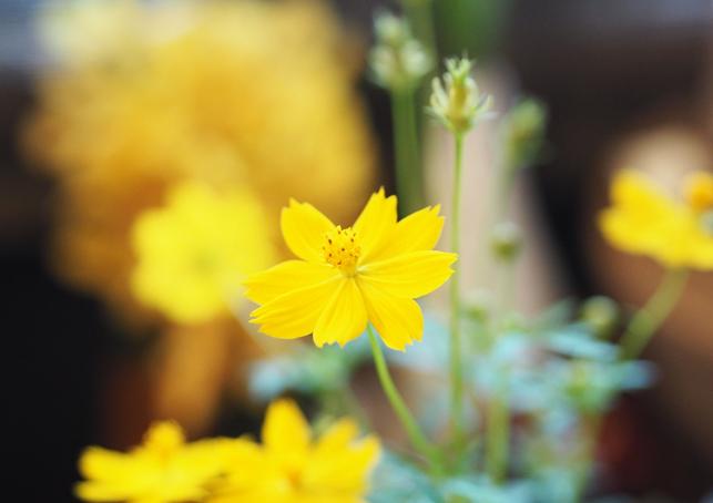 Hepar sulfuris calcareum o Hepar sulfur y sus aplicaciones en homeopatía